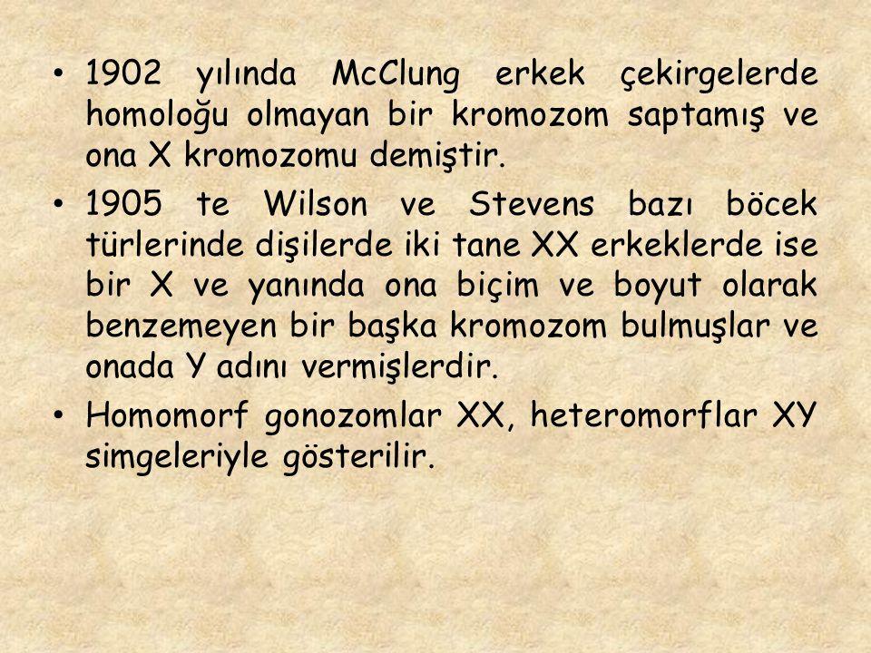 1902 yılında McClung erkek çekirgelerde homoloğu olmayan bir kromozom saptamış ve ona X kromozomu demiştir. 1905 te Wilson ve Stevens bazı böcek türle