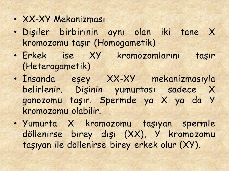 XX-XY Mekanizması Dişiler birbirinin aynı olan iki tane X kromozomu taşır (Homogametik) Erkek ise XY kromozomlarını taşır (Heterogametik) İnsanda eşey