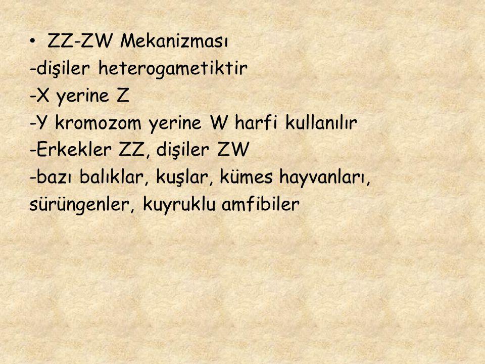ZZ-ZW Mekanizması -dişiler heterogametiktir -X yerine Z -Y kromozom yerine W harfi kullanılır -Erkekler ZZ, dişiler ZW -bazı balıklar, kuşlar, kümes h