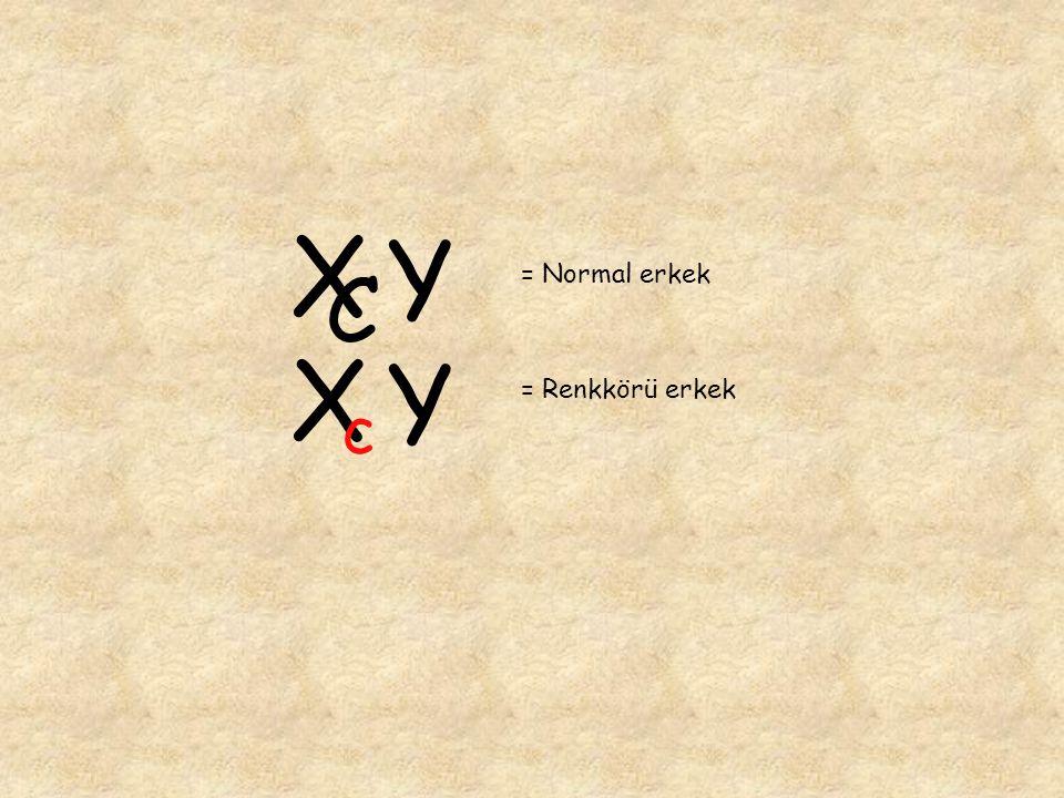 = Normal erkek = Renkkörü erkek X C Y X c Y