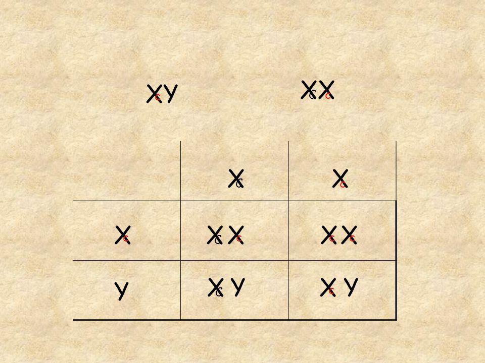 XX Cc XY c Y X c X c X C X c X C X c X c X c X C Y Y
