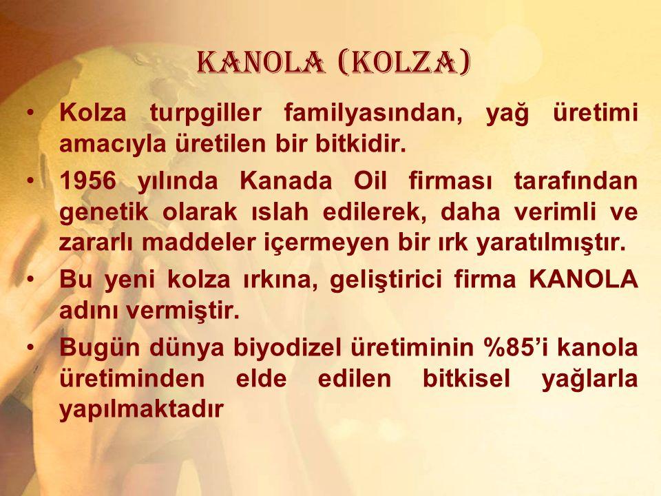 KANOLA (KOLZA) Kolza turpgiller familyasından, yağ üretimi amacıyla üretilen bir bitkidir. 1956 yılında Kanada Oil firması tarafından genetik olarak ı