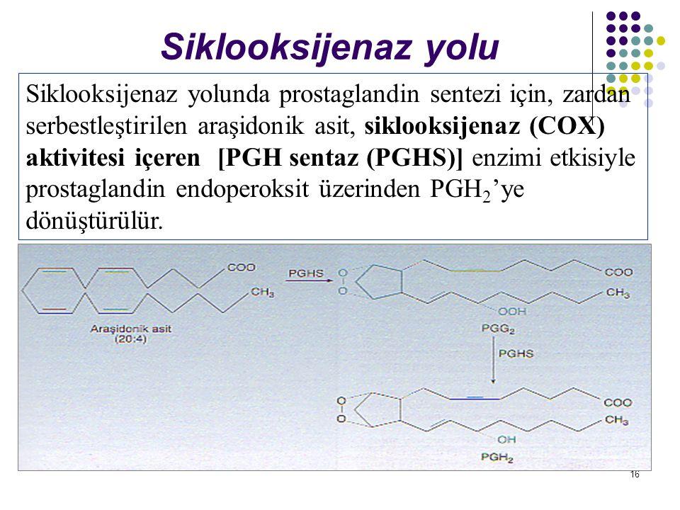 16 Siklooksijenaz yolu Siklooksijenaz yolunda prostaglandin sentezi için, zardan serbestleştirilen araşidonik asit, siklooksijenaz (COX) aktivitesi içeren [PGH sentaz (PGHS)] enzimi etkisiyle prostaglandin endoperoksit üzerinden PGH 2 'ye dönüştürülür.