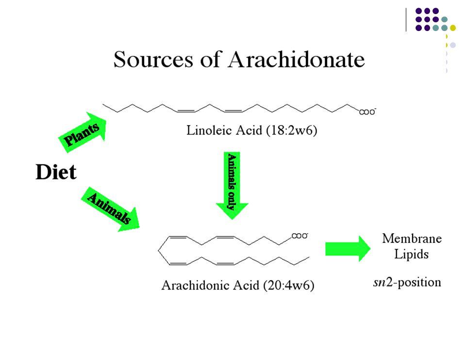 5 Eikozanoidlerin biyosentezi Eikozanoidler, araşidonattan sentezlenirler.