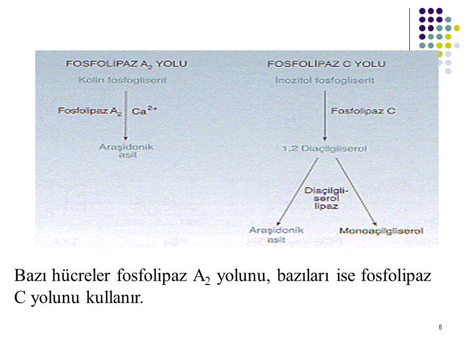 9 Araşidonattan eikozanoid sentezi için üç yol vardır: -Siklooksijenaz yolunda prostaglandinler ve tromboksanlar oluşur.