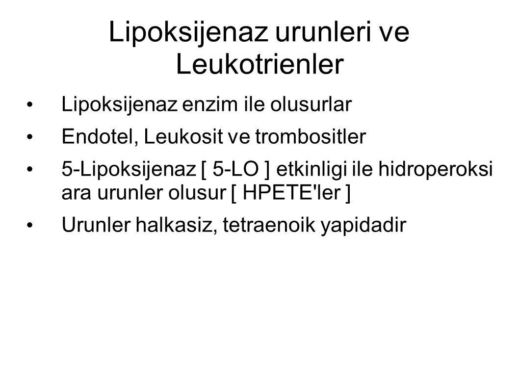 Lipoksijenaz urunleri ve Leukotrienler Lipoksijenaz enzim ile olusurlar Endotel, Leukosit ve trombositler 5-Lipoksijenaz [ 5-LO ] etkinligi ile hidroperoksi ara urunler olusur [ HPETE ler ] Urunler halkasiz, tetraenoik yapidadir