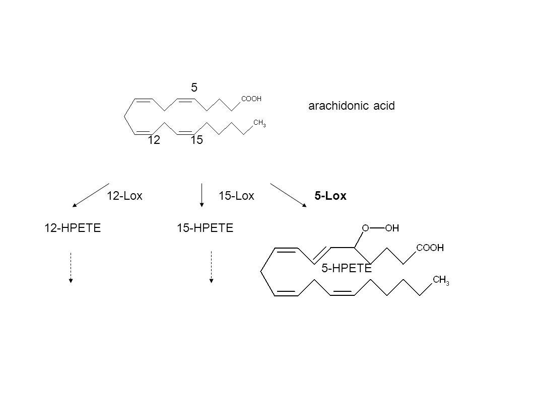 5 1215 5-HPETE 15-HPETE12-HPETE 12-Lox15-Lox5-Lox arachidonic acid