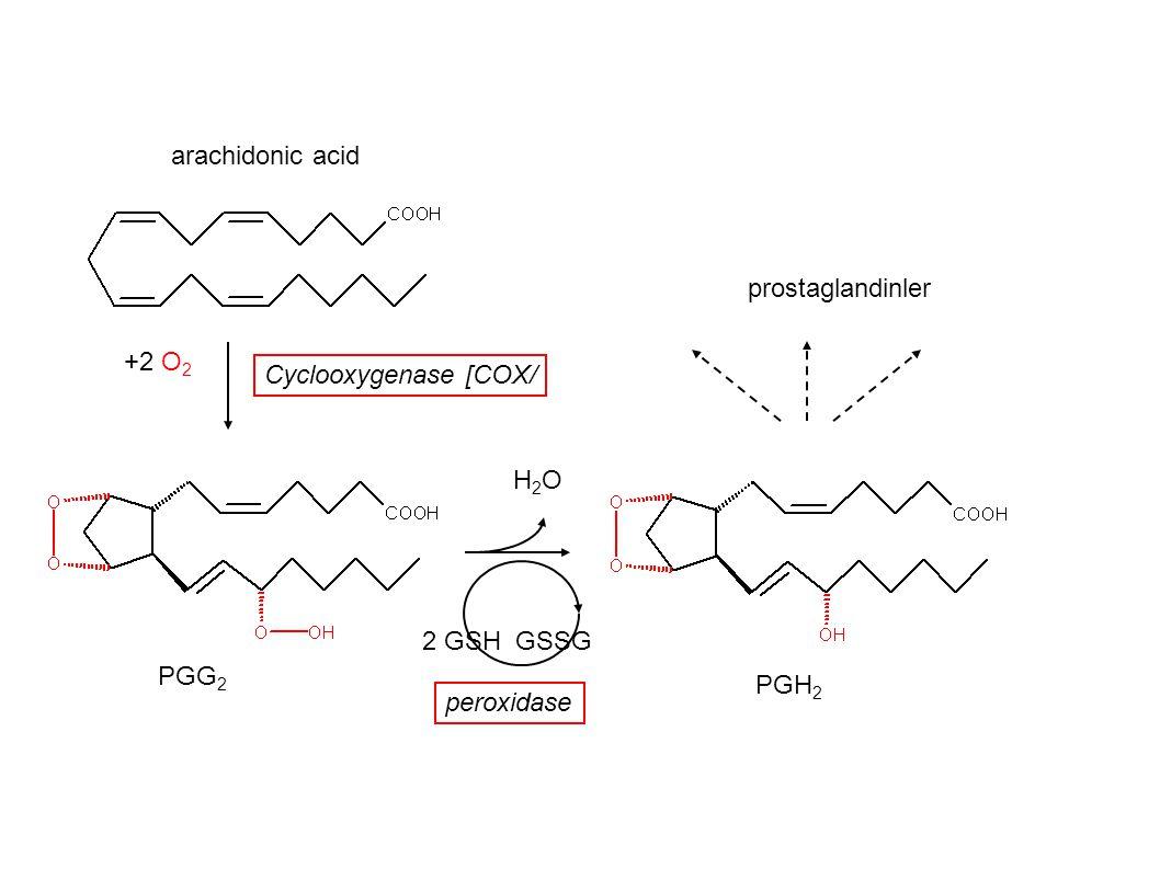 +2 O 2 PGG 2 PGH 2 H2OH2O 2 GSH GSSG prostaglandinler Cyclooxygenase [COX/ peroxidase arachidonic acid