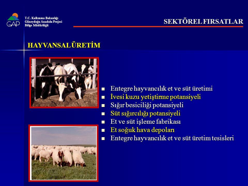 SEKTÖREL FIRSATLAR Entegre hayvancılık et ve süt üretimi Entegre hayvancılık et ve süt üretimi İvesi kuzu yetiştirme potansiyeli İvesi kuzu yetiştirme potansiyeli Sığır besiciliği potansiyeli Sığır besiciliği potansiyeli Süt sığırcılığı potansiyeli Süt sığırcılığı potansiyeli Et ve süt işleme fabrikası Et ve süt işleme fabrikası Et soğuk hava depoları Et soğuk hava depoları Entegre hayvancılık et ve süt üretim tesisleri Entegre hayvancılık et ve süt üretim tesisleri HAYVANSAL ÜRETİM T.C.