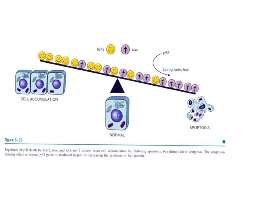 Tm hücresi önca alttaki BM'ı parçalamak zorunda, sonra interstisiyel bağ dokusuna geçer, vasküler BM'ı penetre ederek )dolaşıma karışır.