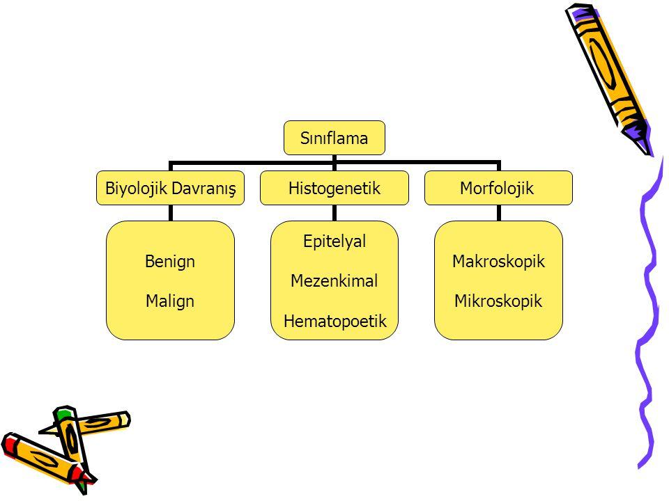 Sınıflama Biyolojik Davranış Benign Malign Histogenetik Epitelyal Mezenkimal Hematopoetik Morfolojik Makroskopik Mikroskopik