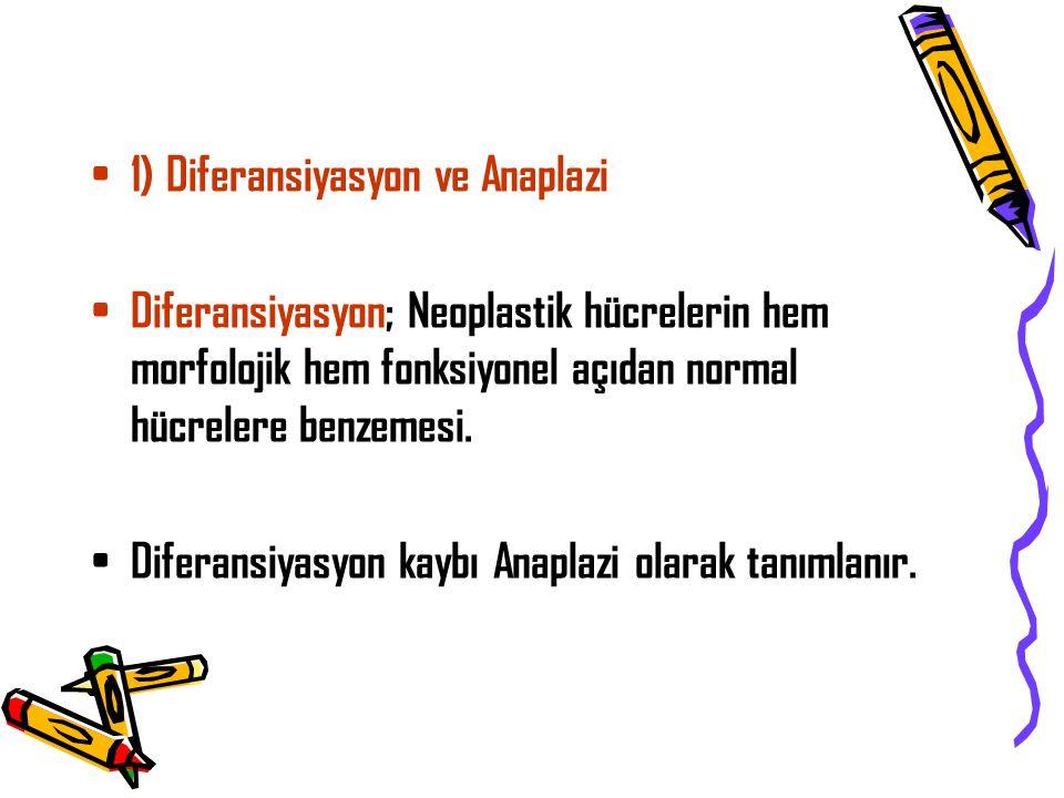 1) Diferansiyasyon ve Anaplazi Diferansiyasyon; Neoplastik hücrelerin hem morfolojik hem fonksiyonel açıdan normal hücrelere benzemesi.