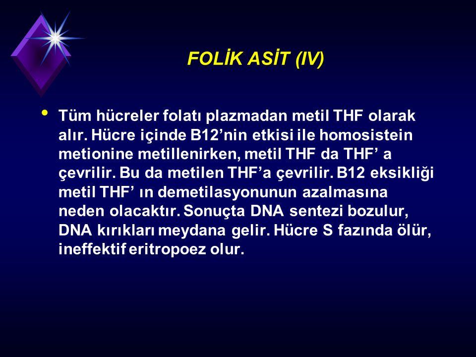 FOLİK ASİT (IV) Tüm hücreler folatı plazmadan metil THF olarak alır. Hücre içinde B12'nin etkisi ile homosistein metionine metillenirken, metil THF da