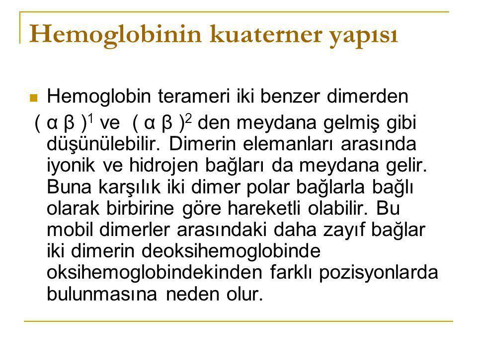 Hemoglobinin kuaterner yapısı Hemoglobin terameri iki benzer dimerden ( α β ) 1 ve ( α β ) 2 den meydana gelmiş gibi düşünülebilir. Dimerin elemanları