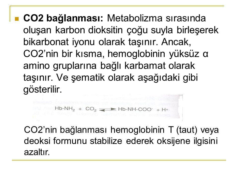CO2 bağlanması: Metabolizma sırasında oluşan karbon dioksitin çoğu suyla birleşerek bikarbonat iyonu olarak taşınır. Ancak, CO2'nin bir kısma, hemoglo