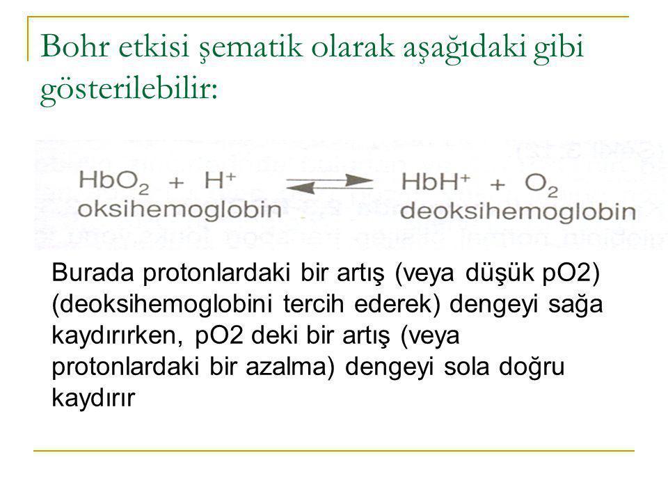 Bohr etkisi şematik olarak aşağıdaki gibi gösterilebilir: Burada protonlardaki bir artış (veya düşük pO2) (deoksihemoglobini tercih ederek) dengeyi sa