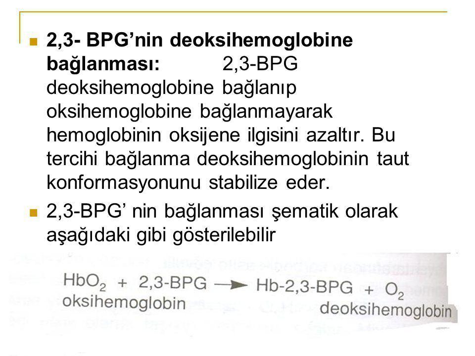 2,3- BPG'nin deoksihemoglobine bağlanması: 2,3-BPG deoksihemoglobine bağlanıp oksihemoglobine bağlanmayarak hemoglobinin oksijene ilgisini azaltır. Bu
