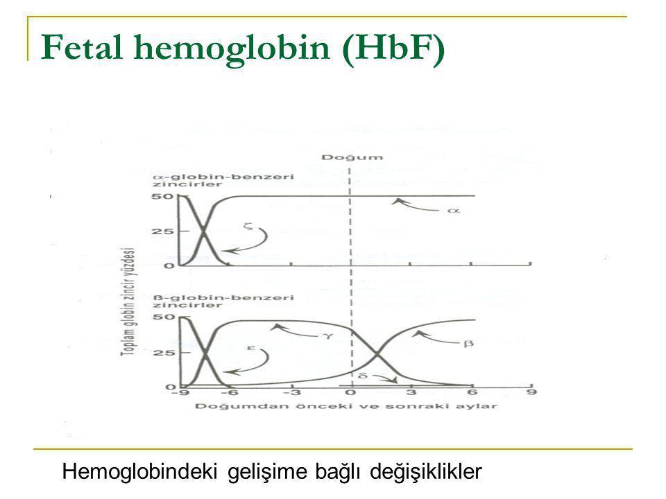 Fetal hemoglobin (HbF) Hemoglobindeki gelişime bağlı değişiklikler