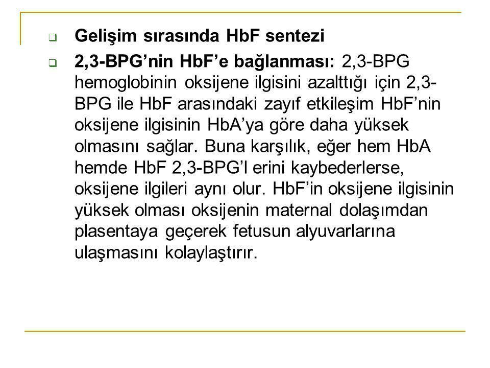  Gelişim sırasında HbF sentezi  2,3-BPG'nin HbF'e bağlanması: 2,3-BPG hemoglobinin oksijene ilgisini azalttığı için 2,3- BPG ile HbF arasındaki zayı