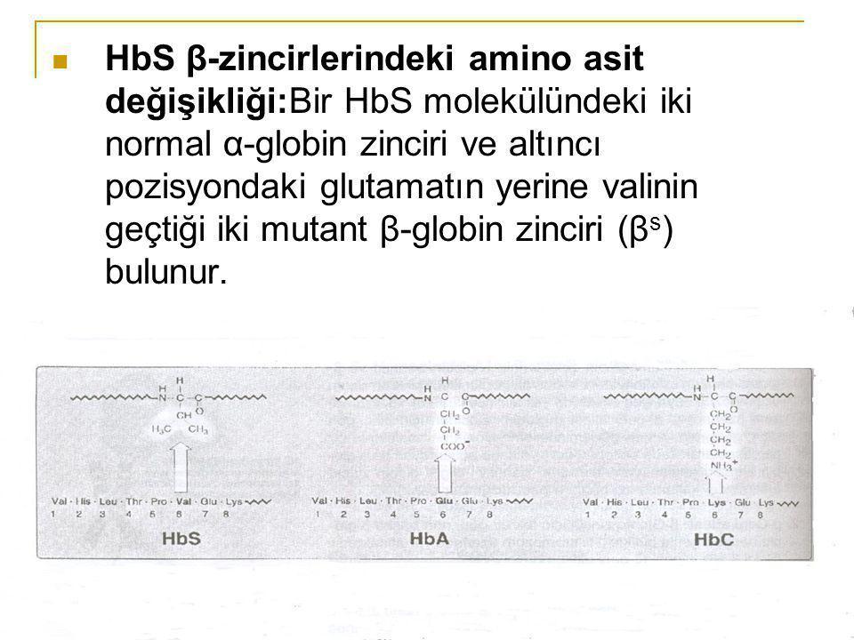 HbS β-zincirlerindeki amino asit değişikliği:Bir HbS molekülündeki iki normal α-globin zinciri ve altıncı pozisyondaki glutamatın yerine valinin geçti
