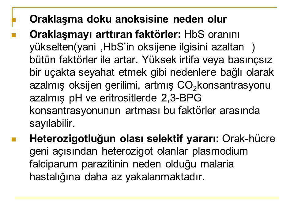 Oraklaşma doku anoksisine neden olur Oraklaşmayı arttıran faktörler: HbS oranını yükselten(yani,HbS'in oksijene ilgisini azaltan ) bütün faktörler ile