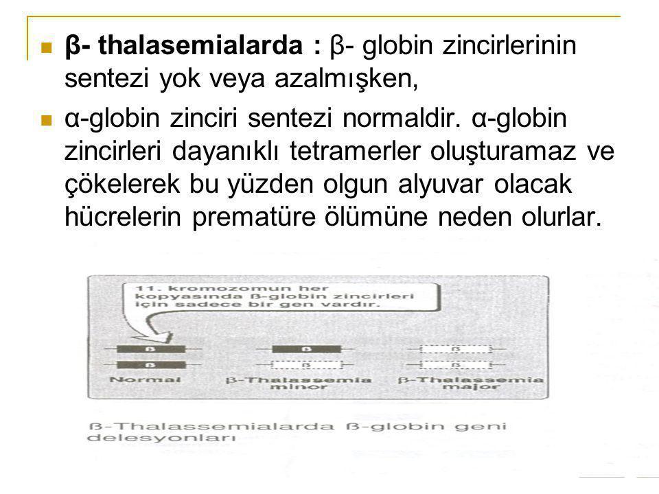 β- thalasemialarda : β- globin zincirlerinin sentezi yok veya azalmışken, α-globin zinciri sentezi normaldir. α-globin zincirleri dayanıklı tetramerle