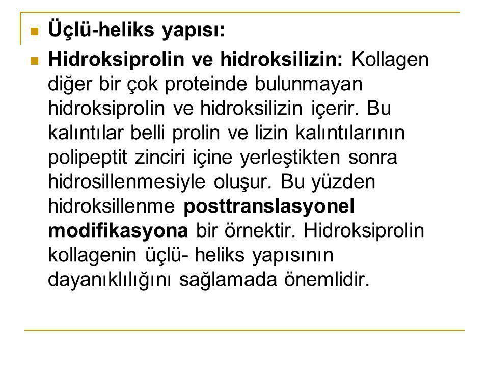 Üçlü-heliks yapısı: Hidroksiprolin ve hidroksilizin: Kollagen diğer bir çok proteinde bulunmayan hidroksiprolin ve hidroksilizin içerir. Bu kalıntılar