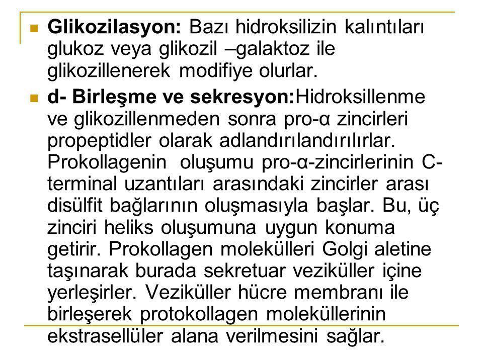 Glikozilasyon: Bazı hidroksilizin kalıntıları glukoz veya glikozil –galaktoz ile glikozillenerek modifiye olurlar. d- Birleşme ve sekresyon:Hidroksill