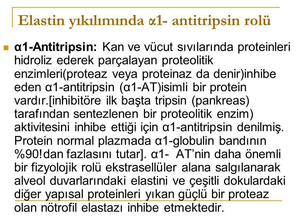 Elastin yıkılımında α1- antitripsin rolü α1-Antitripsin: Kan ve vücut sıvılarında proteinleri hidroliz ederek parçalayan proteolitik enzimleri(proteaz