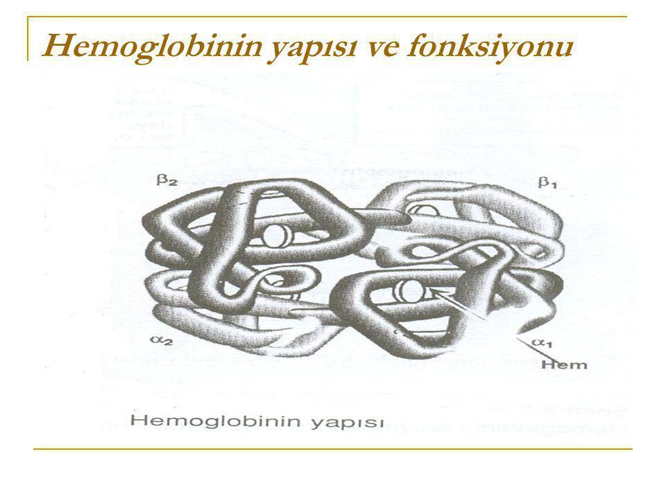 Hemoglobinin yapısı ve fonksiyonu