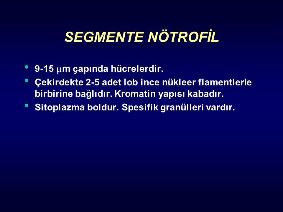 SEGMENTE NÖTROFİL 9-15  m çapında hücrelerdir. Çekirdekte 2-5 adet lob ince nükleer flamentlerle birbirine bağlıdır. Kromatin yapısı kabadır. Sitopla
