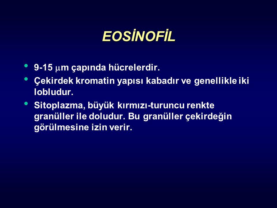 EOSİNOFİL 9-15  m çapında hücrelerdir. Çekirdek kromatin yapısı kabadır ve genellikle iki lobludur. Sitoplazma, büyük kırmızı-turuncu renkte granülle