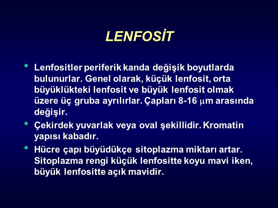 LENFOSİT Lenfositler periferik kanda değişik boyutlarda bulunurlar. Genel olarak, küçük lenfosit, orta büyüklükteki lenfosit ve büyük lenfosit olmak ü