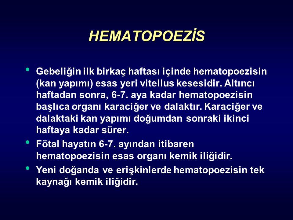 HEMATOPOEZİS Gebeliğin ilk birkaç haftası içinde hematopoezisin (kan yapımı) esas yeri vitellus kesesidir. Altıncı haftadan sonra, 6-7. aya kadar hema