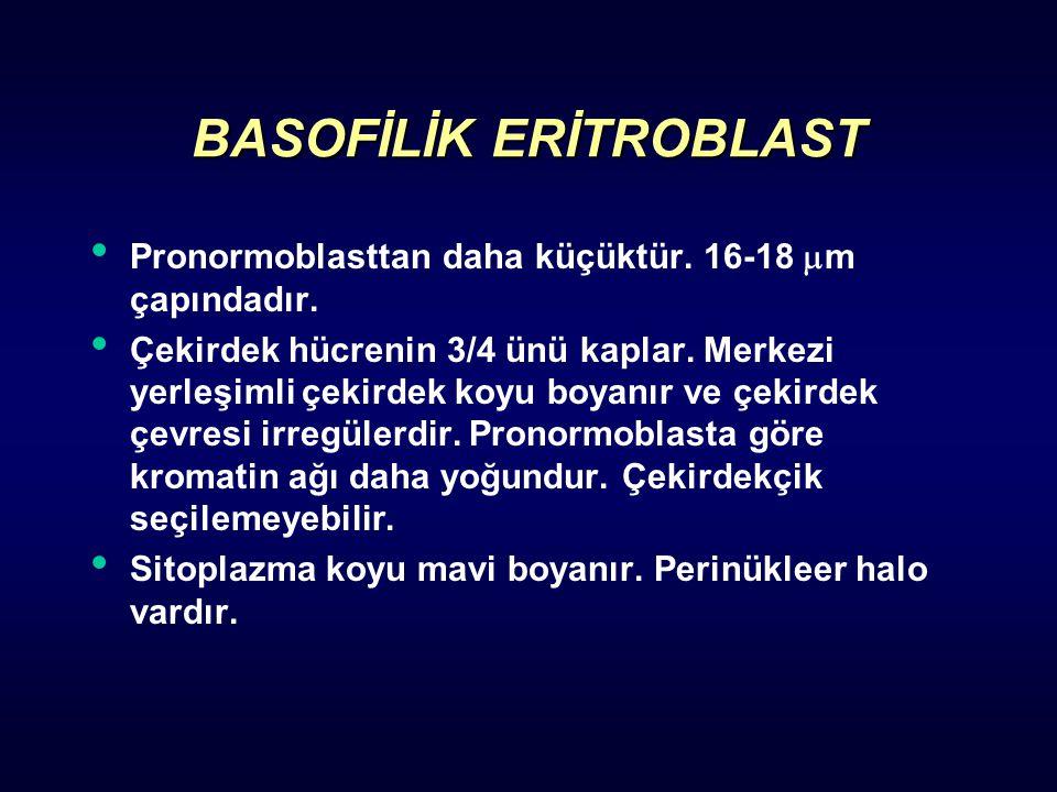BASOFİLİK ERİTROBLAST Pronormoblasttan daha küçüktür. 16-18  m çapındadır. Çekirdek hücrenin 3/4 ünü kaplar. Merkezi yerleşimli çekirdek koyu boyanır