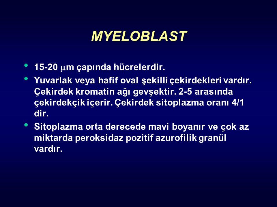 MYELOBLAST 15-20  m çapında hücrelerdir. Yuvarlak veya hafif oval şekilli çekirdekleri vardır. Çekirdek kromatin ağı gevşektir. 2-5 arasında çekirdek