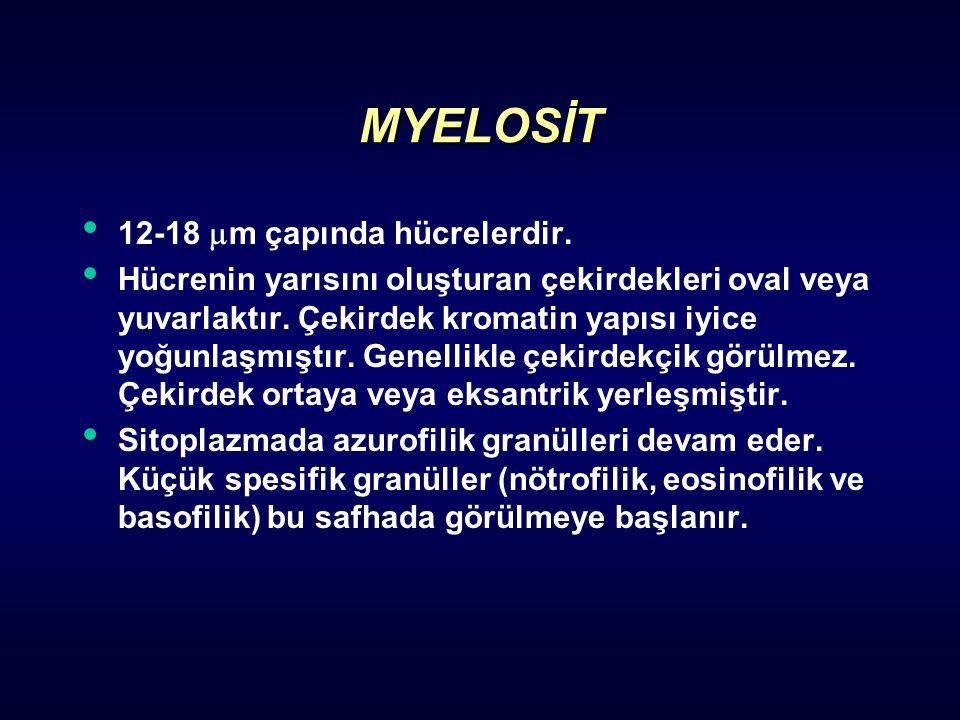 MYELOSİT 12-18  m çapında hücrelerdir. Hücrenin yarısını oluşturan çekirdekleri oval veya yuvarlaktır. Çekirdek kromatin yapısı iyice yoğunlaşmıştır.