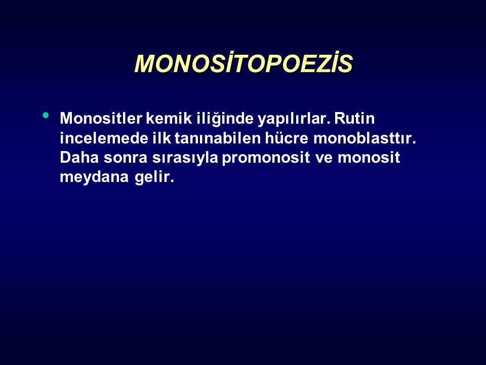 MONOSİTOPOEZİS Monositler kemik iliğinde yapılırlar. Rutin incelemede ilk tanınabilen hücre monoblasttır. Daha sonra sırasıyla promonosit ve monosit m