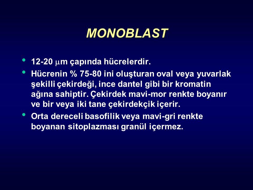 MONOBLAST 12-20  m çapında hücrelerdir. Hücrenin % 75-80 ini oluşturan oval veya yuvarlak şekilli çekirdeği, ince dantel gibi bir kromatin ağına sahi