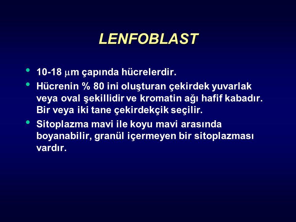 LENFOBLAST 10-18  m çapında hücrelerdir. Hücrenin % 80 ini oluşturan çekirdek yuvarlak veya oval şekillidir ve kromatin ağı hafif kabadır. Bir veya i