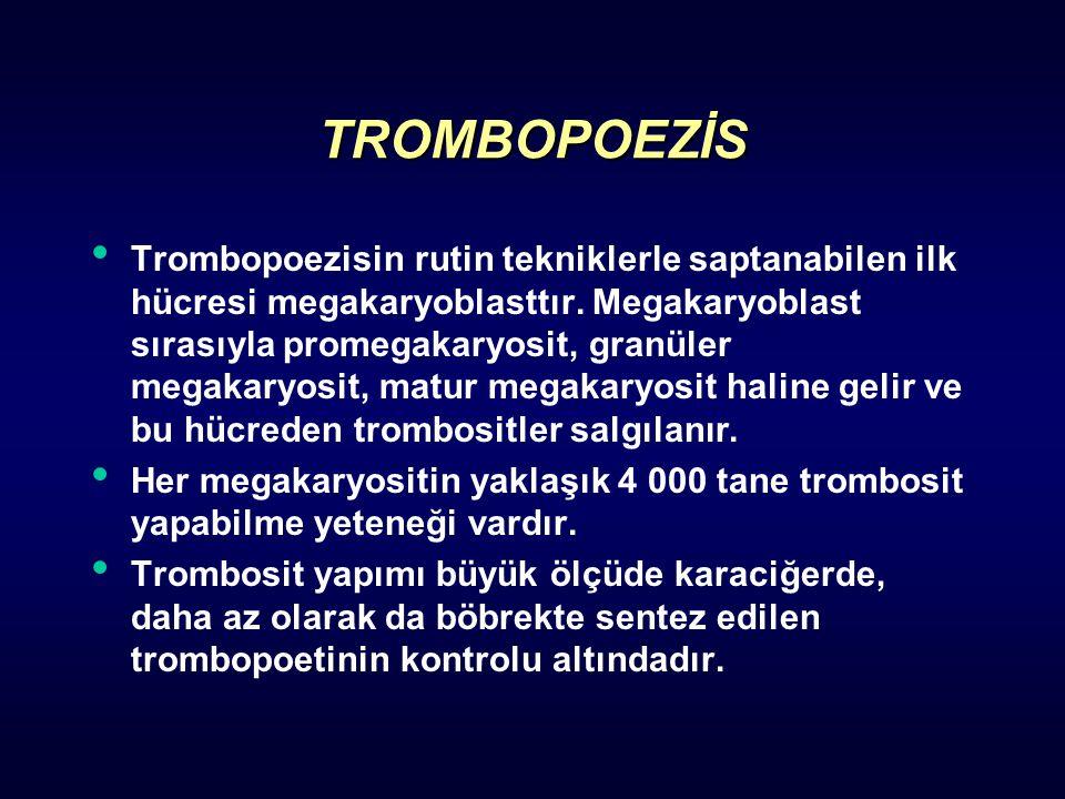 TROMBOPOEZİS Trombopoezisin rutin tekniklerle saptanabilen ilk hücresi megakaryoblasttır. Megakaryoblast sırasıyla promegakaryosit, granüler megakaryo