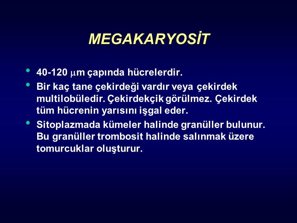 MEGAKARYOSİT 40-120  m çapında hücrelerdir. Bir kaç tane çekirdeği vardır veya çekirdek multilobüledir. Çekirdekçik görülmez. Çekirdek tüm hücrenin y