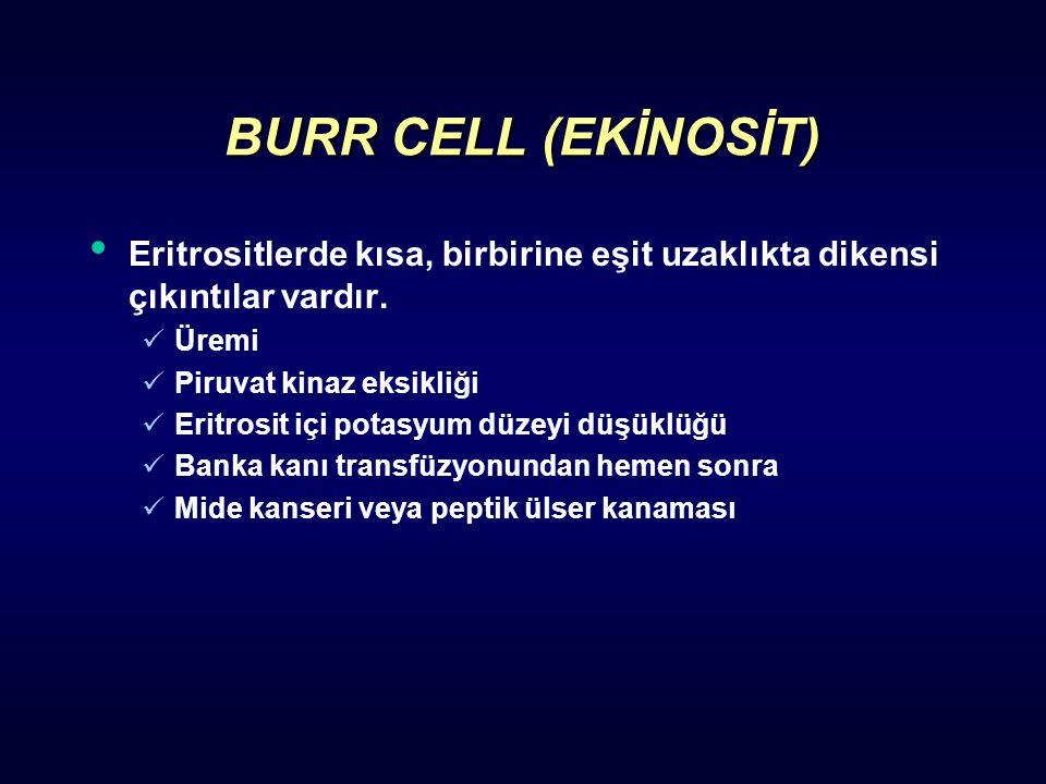 BURR CELL (EKİNOSİT) Eritrositlerde kısa, birbirine eşit uzaklıkta dikensi çıkıntılar vardır. Üremi Piruvat kinaz eksikliği Eritrosit içi potasyum düz