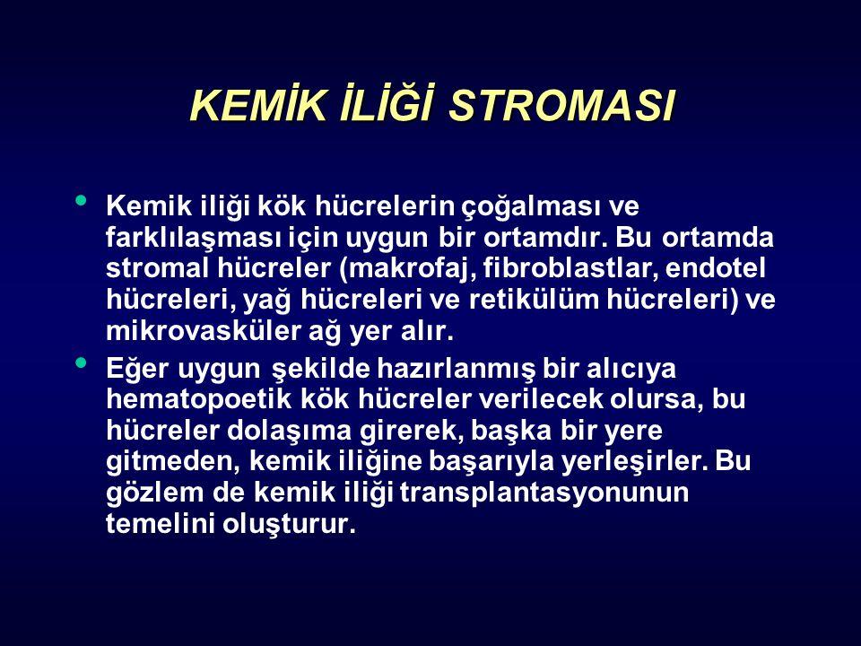 KEMİK İLİĞİ STROMASI Kemik iliği kök hücrelerin çoğalması ve farklılaşması için uygun bir ortamdır. Bu ortamda stromal hücreler (makrofaj, fibroblastl