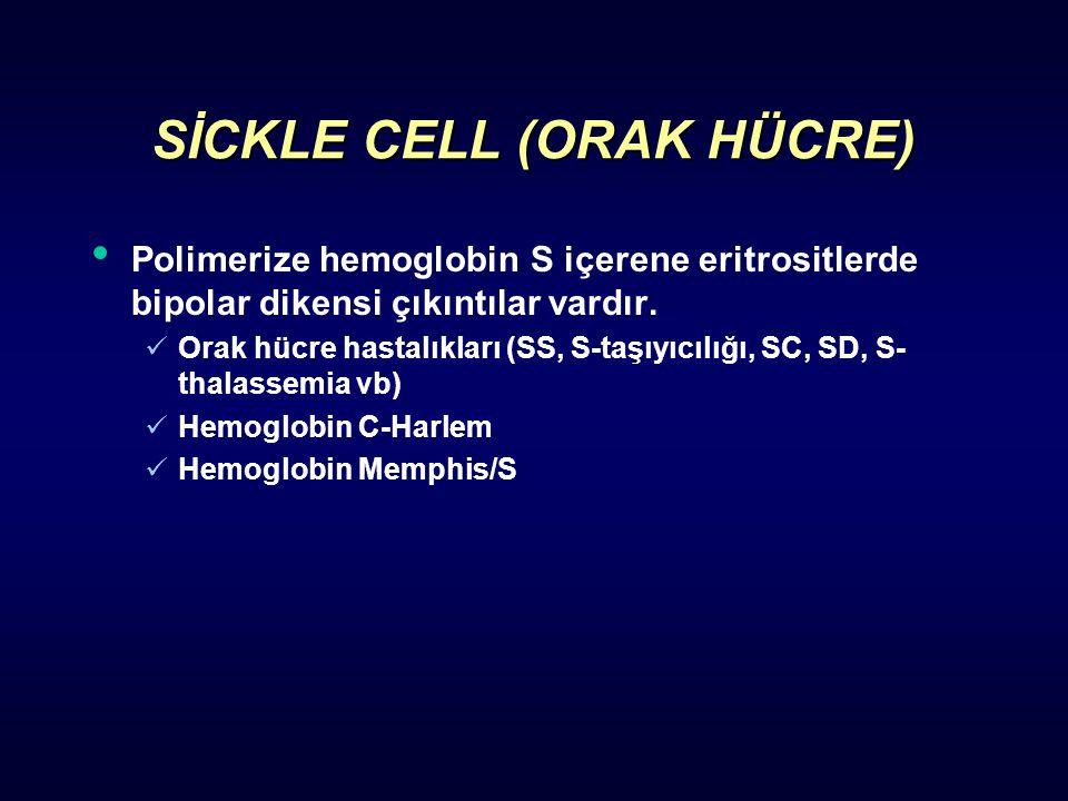 SİCKLE CELL (ORAK HÜCRE) Polimerize hemoglobin S içerene eritrositlerde bipolar dikensi çıkıntılar vardır. Orak hücre hastalıkları (SS, S-taşıyıcılığı