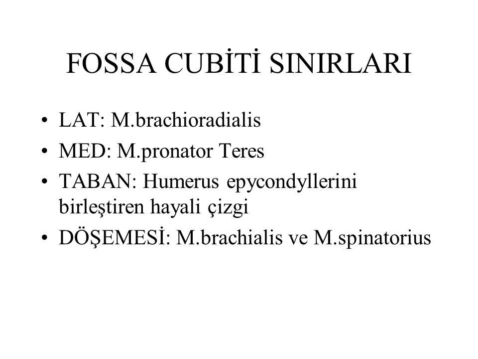 FOSSA CUBİTİ SINIRLARI LAT: M.brachioradialis MED: M.pronator Teres TABAN: Humerus epycondyllerini birleştiren hayali çizgi DÖŞEMESİ: M.brachialis ve M.spinatorius