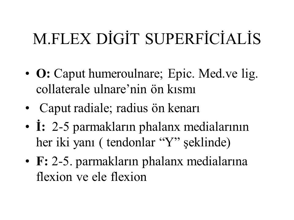 M.FLEX DİGİT SUPERFİCİALİS O: Caput humeroulnare; Epic. Med.ve lig. collaterale ulnare'nin ön kısmı Caput radiale; radius ön kenarı İ: 2-5 parmakların
