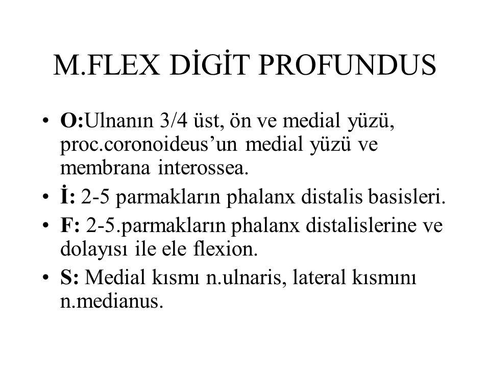 M.FLEX DİGİT PROFUNDUS O:Ulnanın 3/4 üst, ön ve medial yüzü, proc.coronoideus'un medial yüzü ve membrana interossea. İ: 2-5 parmakların phalanx distal
