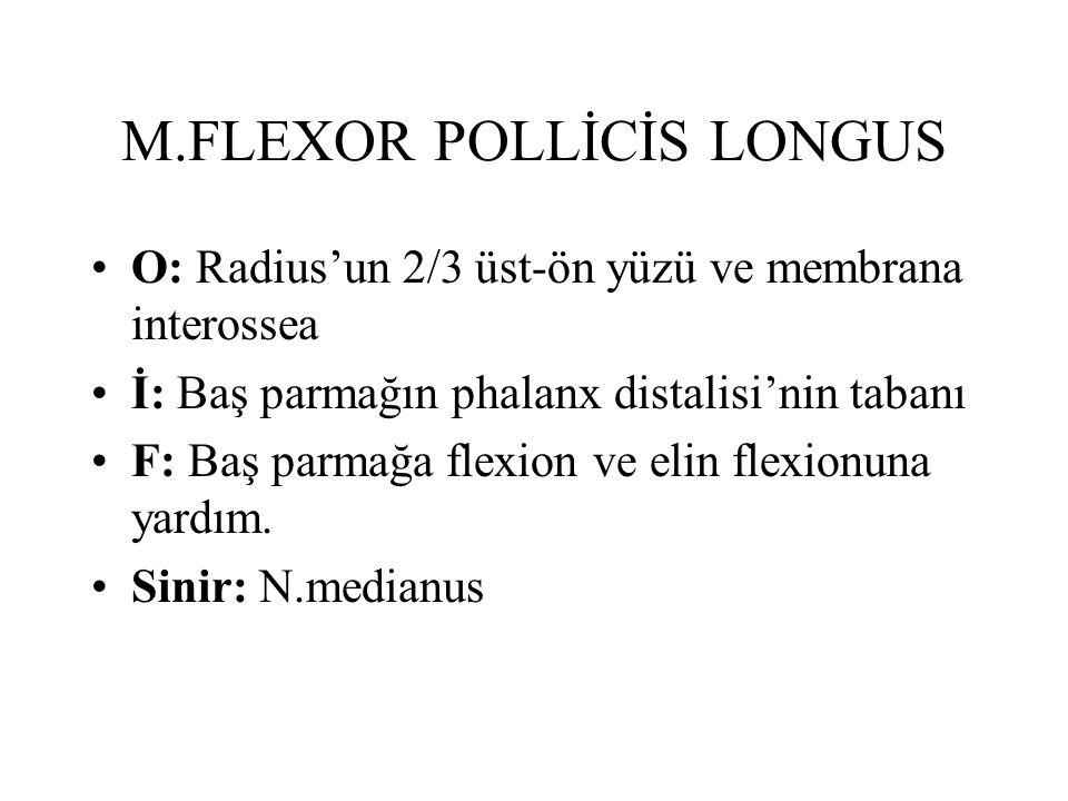 M.FLEXOR POLLİCİS LONGUS O: Radius'un 2/3 üst-ön yüzü ve membrana interossea İ: Baş parmağın phalanx distalisi'nin tabanı F: Baş parmağa flexion ve elin flexionuna yardım.