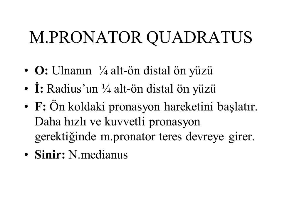 M.PRONATOR QUADRATUS O: Ulnanın ¼ alt-ön distal ön yüzü İ: Radius'un ¼ alt-ön distal ön yüzü F: Ön koldaki pronasyon hareketini başlatır. Daha hızlı v